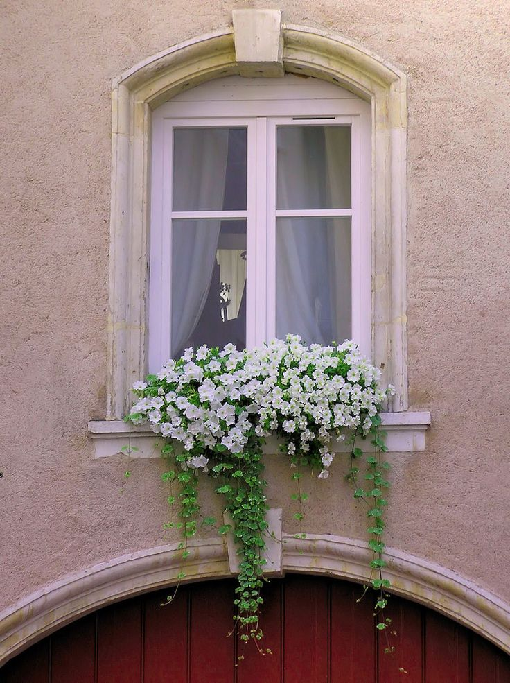 Window box filled with white petunias, Nancy, France