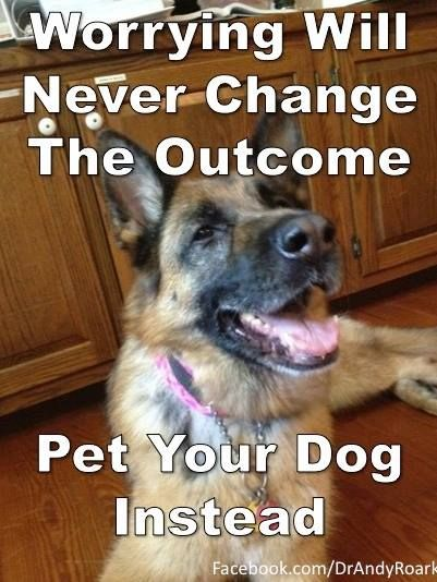 It absolutely works. You are simply unable to stress and pet a dog at the same time. I prefer the latter.