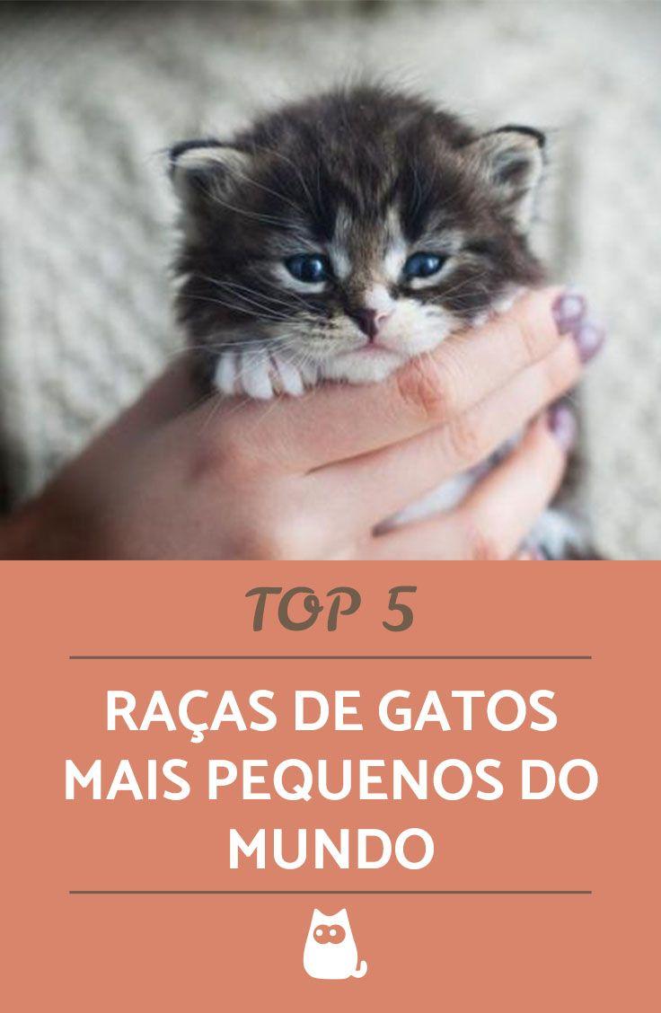 1e432e8fc Pequenas em tamanho, gigantes em FOFURA! Descubra quais são 5 raças de  gatos mais pequenas do mundo. #gatos #raças #felinos #animais #pets  #raçaspequenas # ...