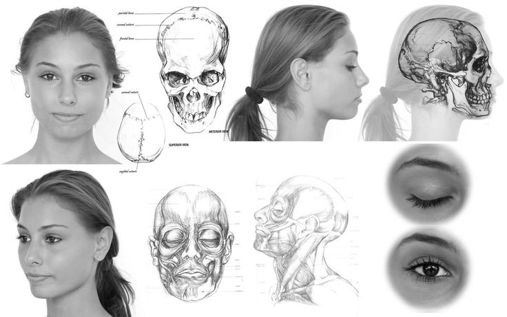 Basic Proportion and Gesture for Head Drawing. - YouTube