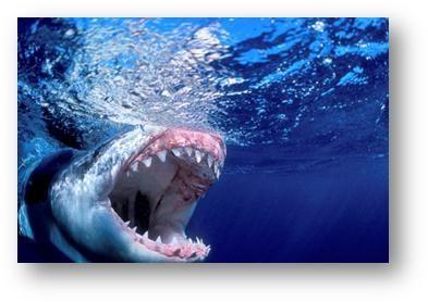 Take a Sneak Peek of What SHARK WEEK 2014 Has to Offer! (Video)