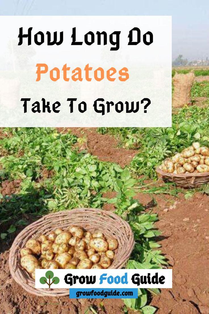 How long do potatoes take to growgrow long potatoes in