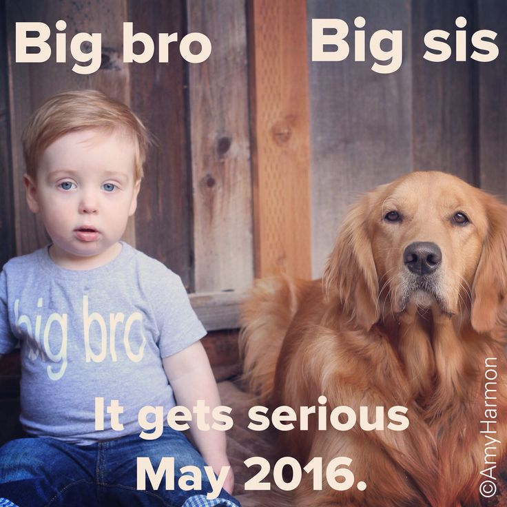 Our 2nd child pregnancy announcement. While we got the toddler and the dog to sit for a few seconds, smiling was out of the question--so we came up with a caption to fit their mood;) ©AmyHarmon