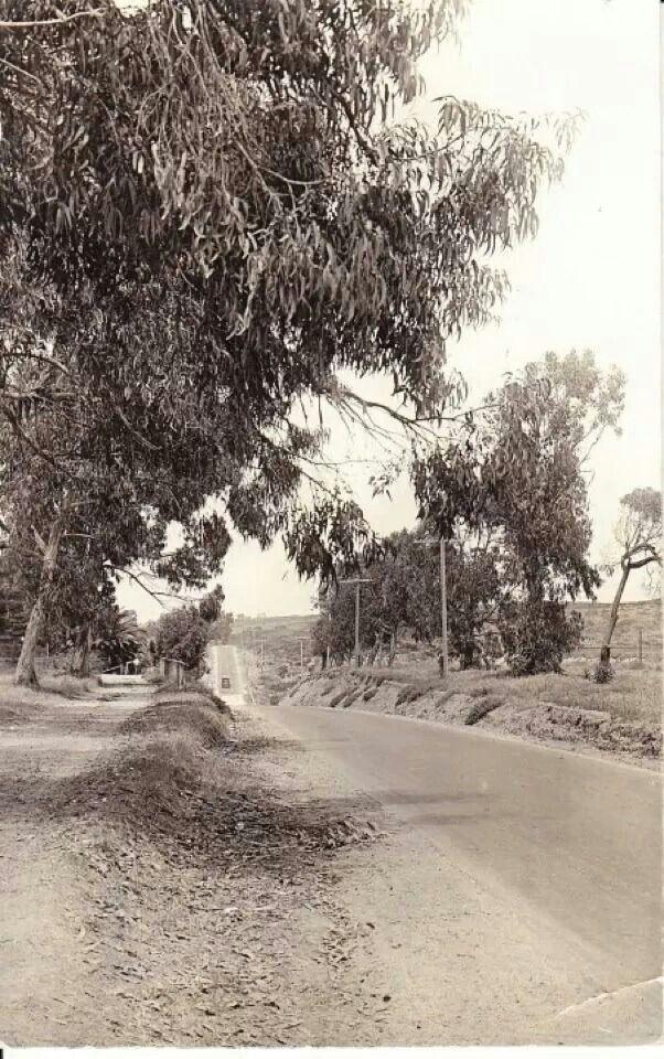 Encinitas 101 Mainstreet Association: Before The Road Became Old Highway 101 Encinitas, Ca.