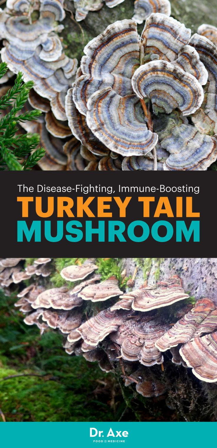 When it comes to functional foods, the turkey tail mushroom, often called turkey tail fungus, may top the list.