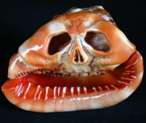 223 Best Seashell Carvings Images On Pinterest Shells