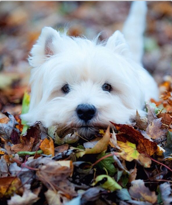 The perfect buddy for playing in the autumn leaves!