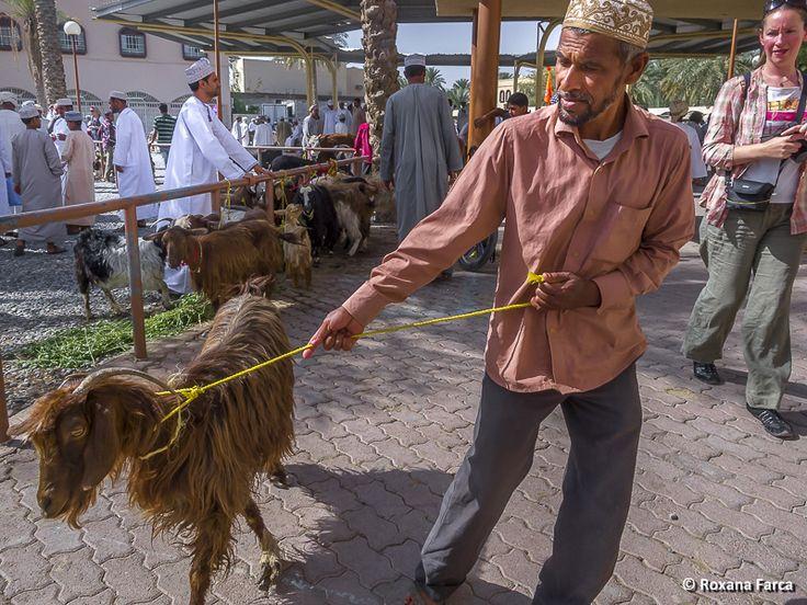 Targ de animale in Nizwa, Oman Animal fair in Nizwa, Oman