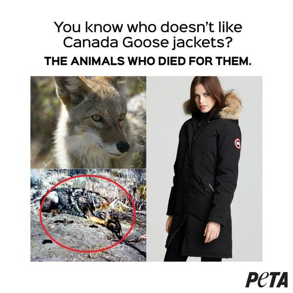 Canada Goose toronto replica fake - You know who doesn't like Canada Goose jackets? the animals who ...
