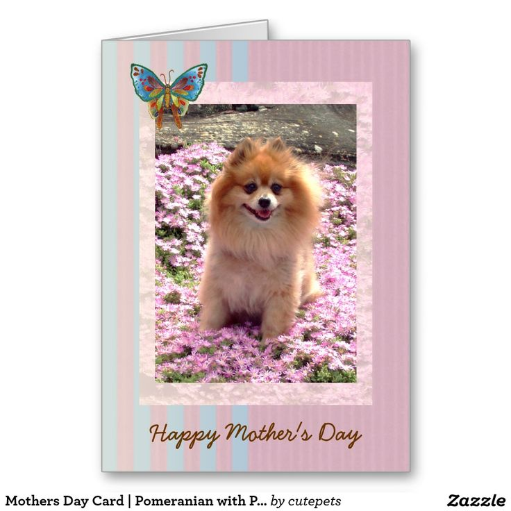 Mothers Day Card | Pomeranian with Pink Flowers