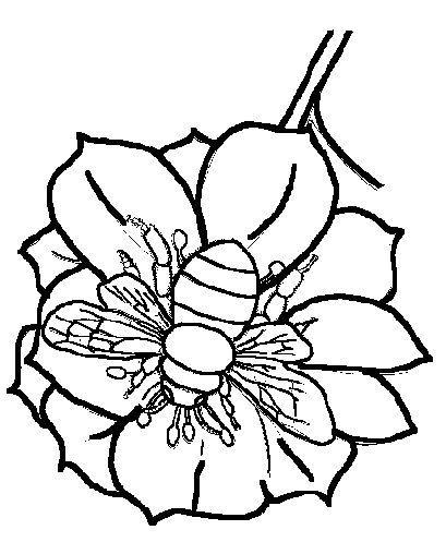 Sucking Bees Flowers