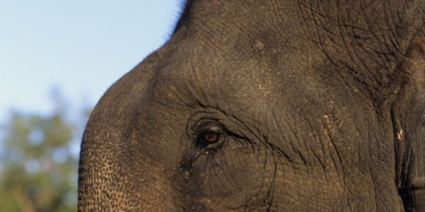 Urge Indian Forest Department to Take Action on Elephant Torture!