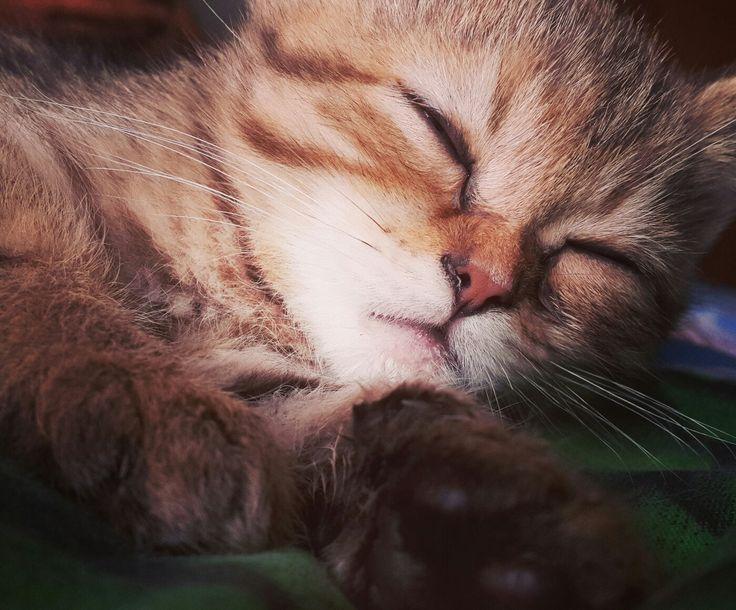 Cuteeeeee sleeping cat