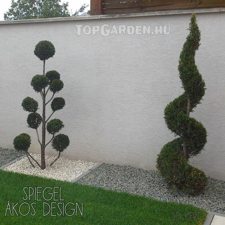SD KERT - kertépítés, forma növények, alak növények, kerti formák, formatervezés, modern kert, klasszikus kert, kerti díszek, formanövény, alaknövény, nyírt, vágott, szabályozott, dísznövények, soliter növény, látvány, csavart ciprus