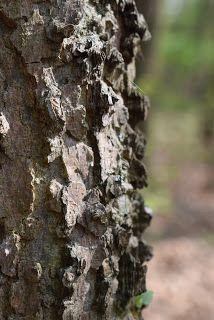 Süti és más...: Tavaszi erdő az én szememmel