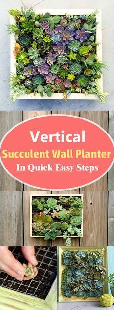 Learn how to make a vertical succulent wall planter in a few steps without spending money. You don't need to be a great DIYer to have this DIY succulent frame in your home.