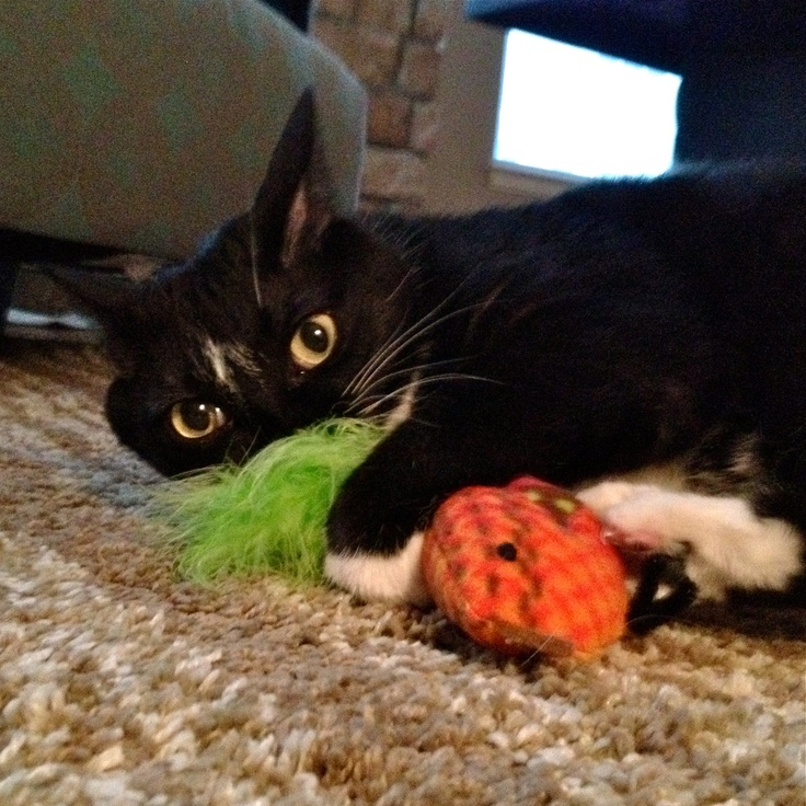Cat / Kitten Toy Bird with Bell and Feather Tail by CritterProject, $9.50