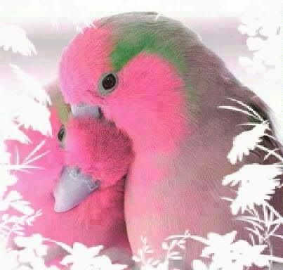 Love Birds Look At The Pink Its So Intriquite Being A Future Ornithologist