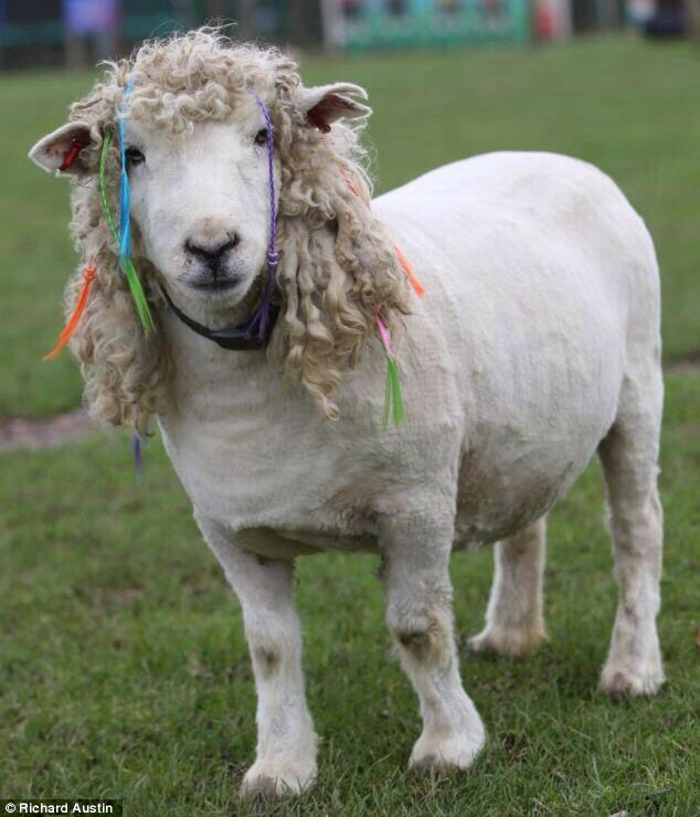 Sheep with Dreads ...... This is one Funky Lamb!!
