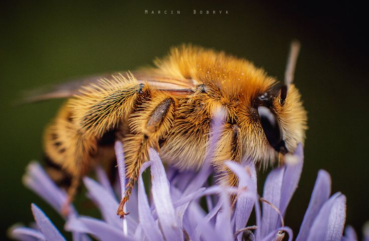 I'm Bee