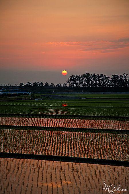 Sunset in rice field, Toyama, Japan