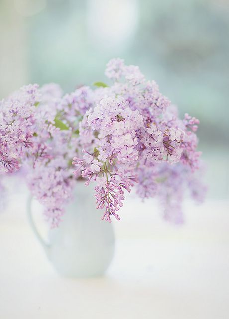 prettylittleflower: Lilacs by...