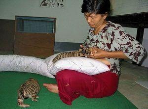 5 Weird Cases Of Women Breastfeeding Animals