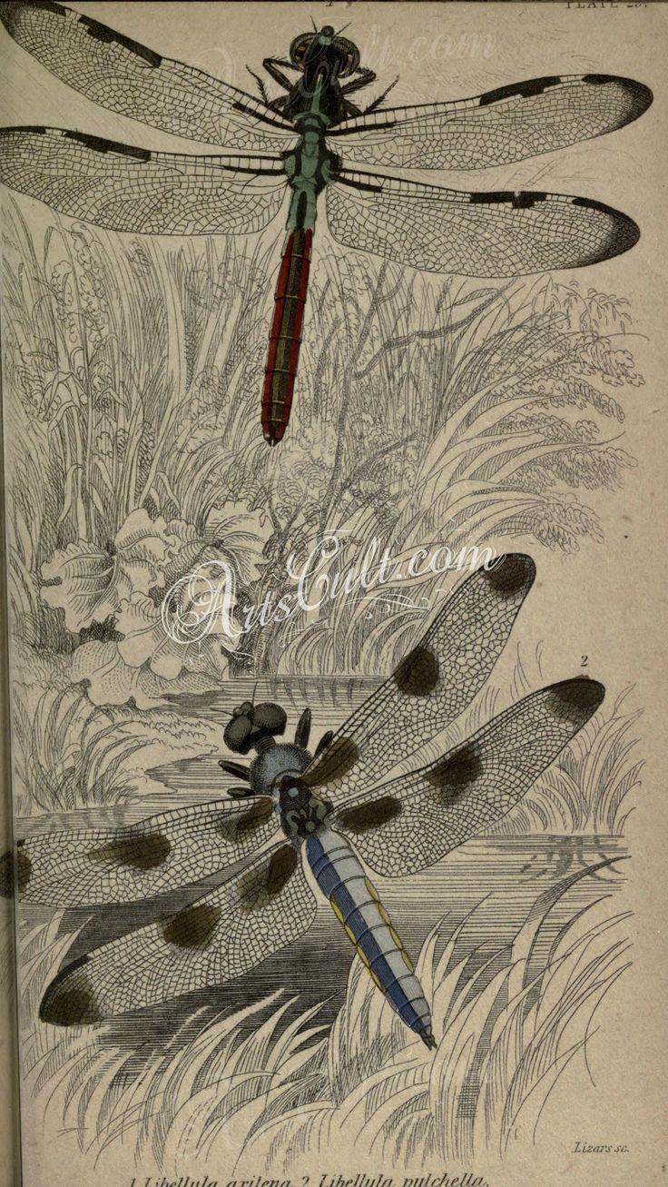Eccezionale Oltre 25 fantastiche idee su Arte libellula su Pinterest  FT23