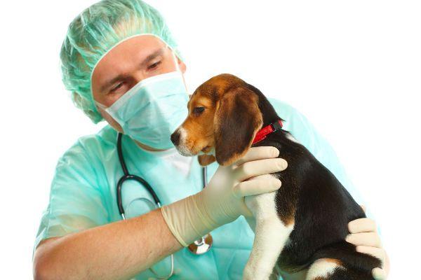 Maintain a Healt Relationship With our beloved Pooch - http://www.dog-ramblers.co.uk/dog-walking-st-helens-skelmersdale/  #DogTrainingSkelmersdale
