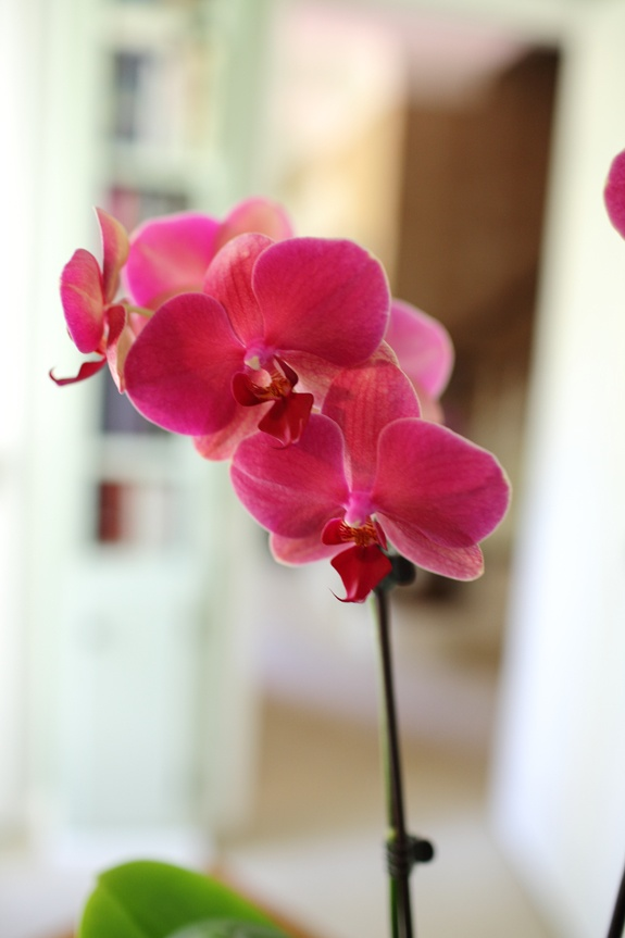 how to get more orchids minecraft