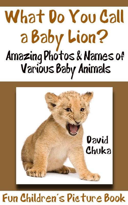 What Do You Call a Baby Lion? a book for children that explores the names of baby animals. Do you know the name of a baby jellyfish?