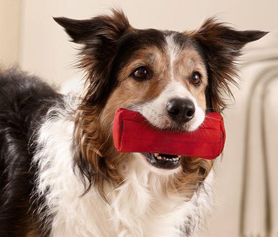 Zum spielerischen Lernen - #Hunde-Apportiertasche für €5,95 bei #Tchibo