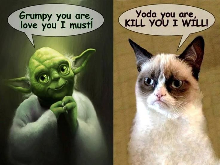132 best images about Grumpy Cat on Pinterest | Brother ...