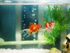 25 best ideas about cheap fish tanks on pinterest tank for Cheap betta fish