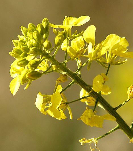 Gyógyító virágok   femina.hu