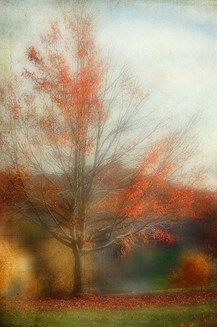 by ania: Exposure Photo, Stuff, Fall Colors, Beautiful Blurred Watercolor, Photography Art, Autumn Photo, Art Photography Autumn Glories