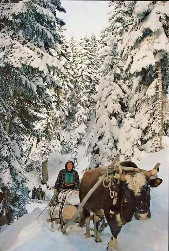 Zordur Karadeniz de kadın olmak Karadeniz kadınının hırçın doğa koşullarına karşı mücadelesi