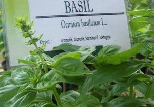 bibit tanaman herbal. Bumi Herbal Dago