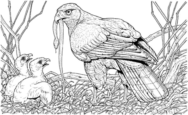 eagle and snake coloring pages - photo #10