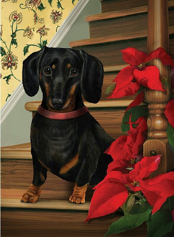 Christmas black tan