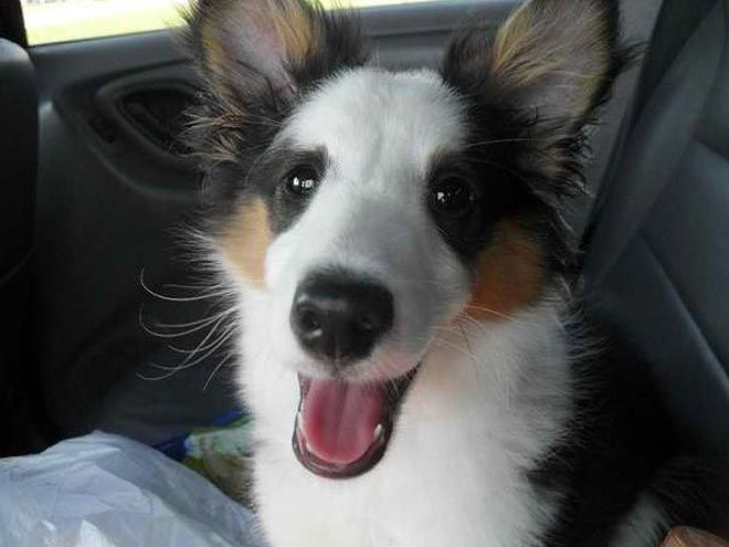 Smiley dog for the win!    Click to see more cute cute pets: http://www.peoplepets.com/people/pets/gallery/0,,20615935,00.html: Cutest Pets, Cute Pets, People Pets, Baby Animals, Smiley Dog