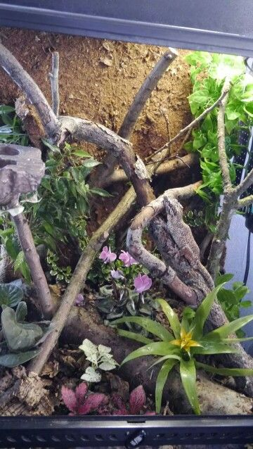 37 Best Diy Chameleon Enclosure Vivarium Images On