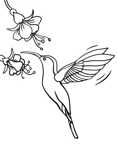 Simple hummingbird coloring pages for Hummingbird coloring page