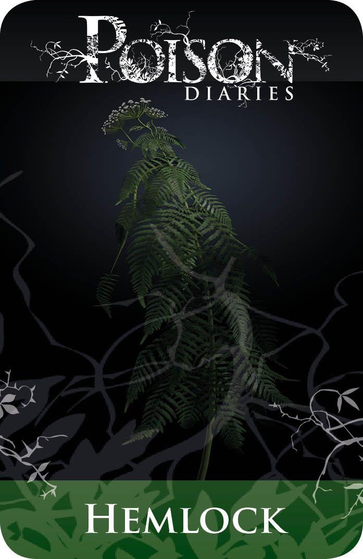 Poisonous Plants:  Hemlock.