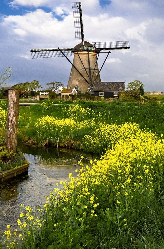 Kinderdijke The Netherlands when I was little I begged my daddy to let me have my birthday party here