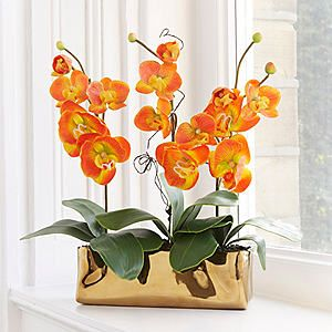 Orange Orchid Plant #Kaleidoscope #Orchid #Eastern #Exotic #Plant #Flower #Botanical