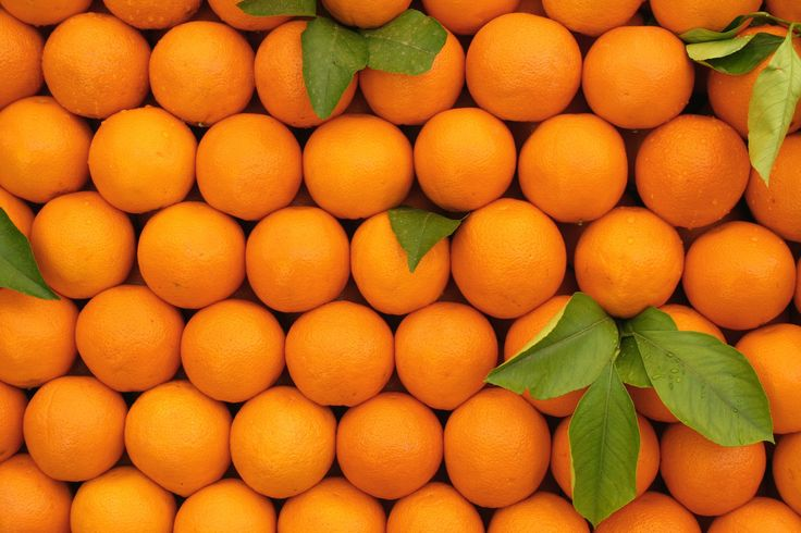 Florida Agriculture Industry Can't Shake Citrus Fall, Land Loss