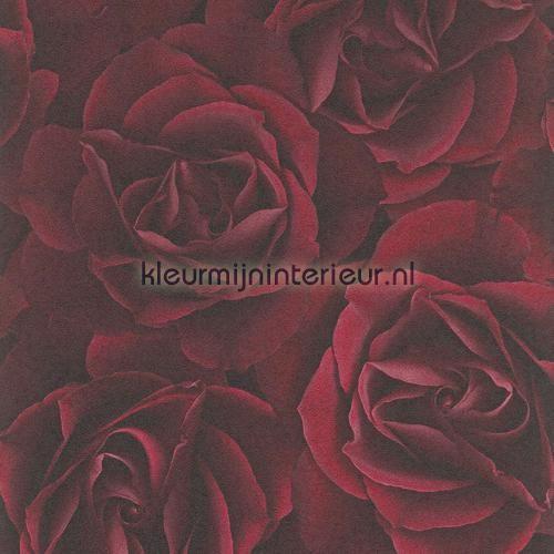 Rode rozen behang 525625 uit de collectie Crispy Paper van Rasch is verkrijgbaar bij kleurmijninterieur