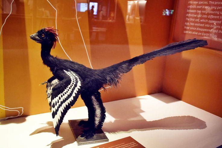 Nantes museum d histoire naturelle loire atlantique 2