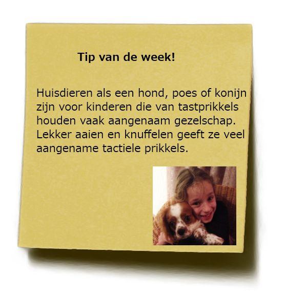 Tipwk6 2013 waarom een huisdier voor sommige kinderen sensorisch waardevol gezelschap is...